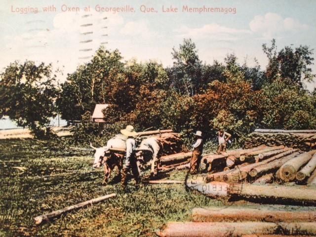Logs -cutting post card